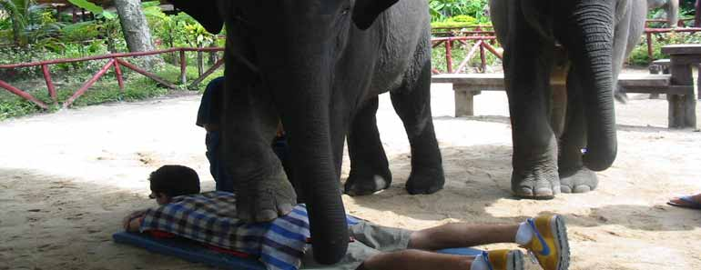 Photo: Baby elephant gives tourist a massage.