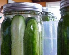 Photo of fresh jars of home made dill pickles.